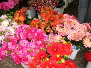 portland fiori