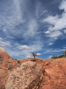 New Mexico rock tree