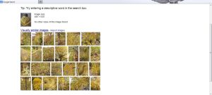 Google Images-yellows