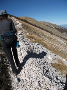 Abruzzo-bluebottle