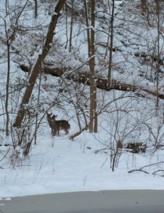 swirt-deer