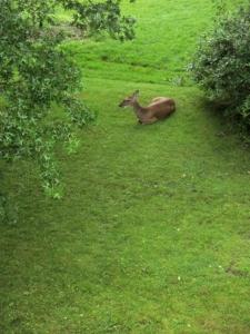 deer2 014 - Copy