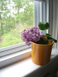 lilac in fiestaware