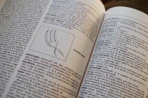 dictionary-runcible