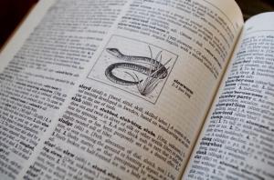 dictionary-slowworm