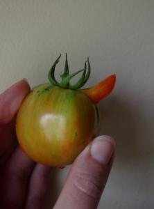 hinky-tomato