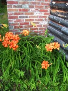 NH-daylilies
