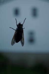 winged-fly