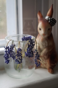 dead grape hyacinths