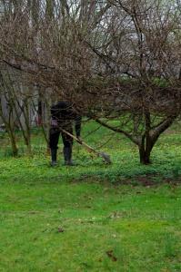 dead robin burial