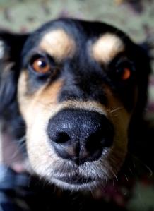 rocco's nose