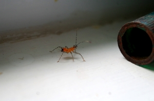 late summer-assasin bug
