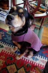 dogsweater-model