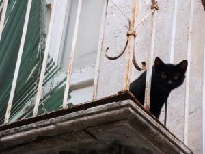 pussy-balcony