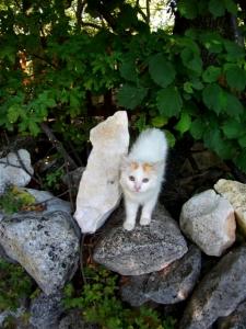 pussy-trail-cat