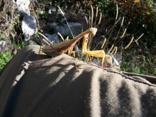 I17-mantis