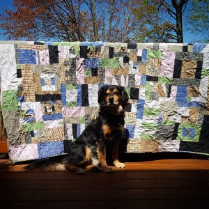 mutt sitting in front of scrappy quilt on deck